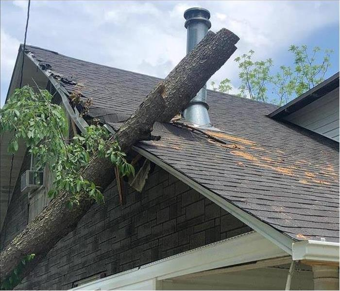 Large tree through the side of a roof on a home.